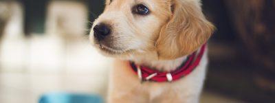 pet health insurance Winder, GA